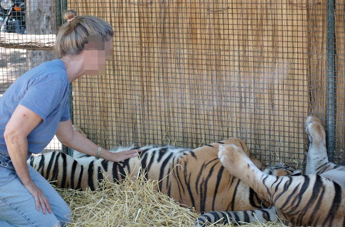 zoo_lujc3a1n_animales